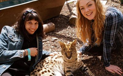 Meet the African Big Cats for Two Gift Experience from Holiday Hamster