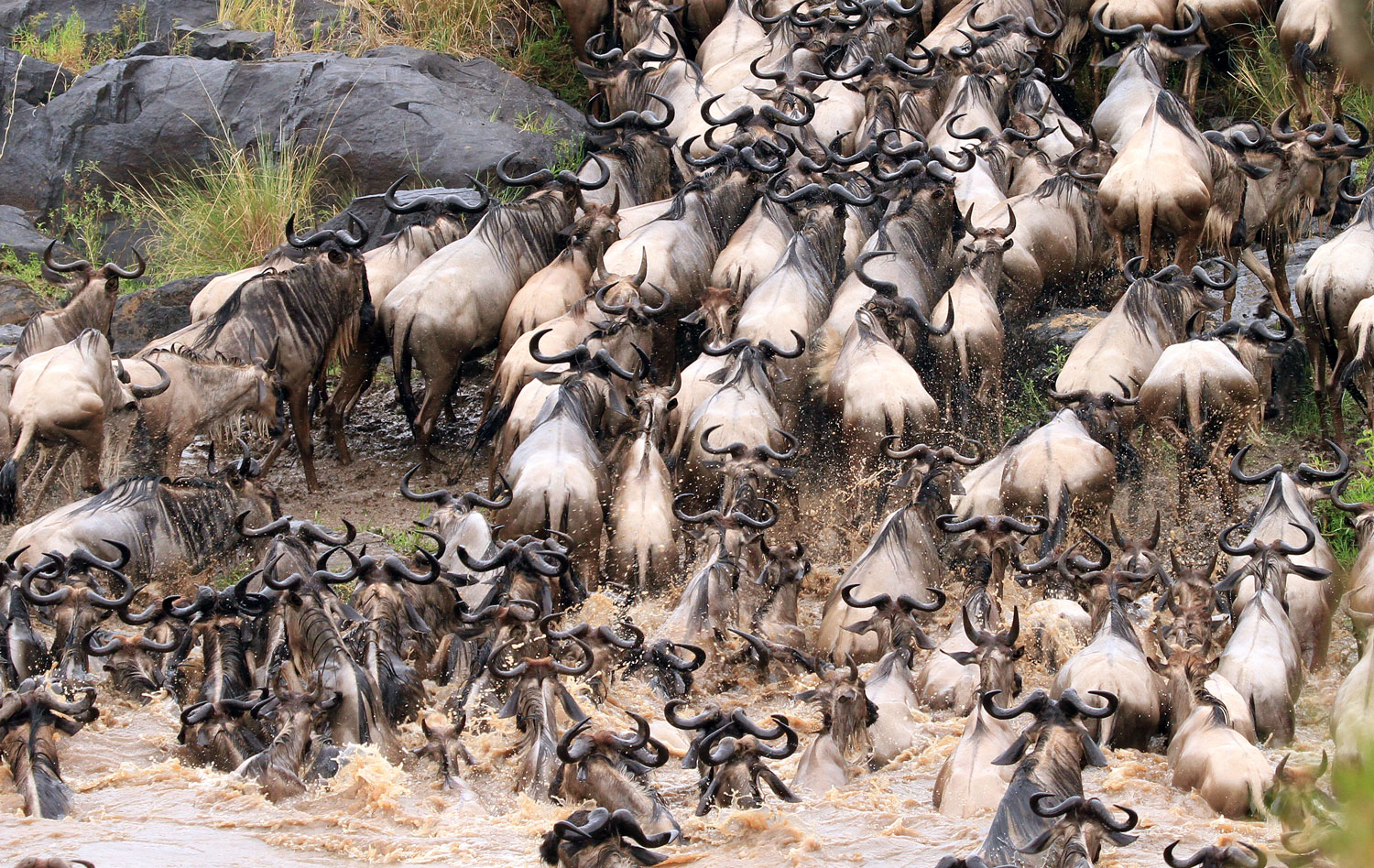Witness the Real-Life Drama of the Animal Kingdom in the Masai Mara