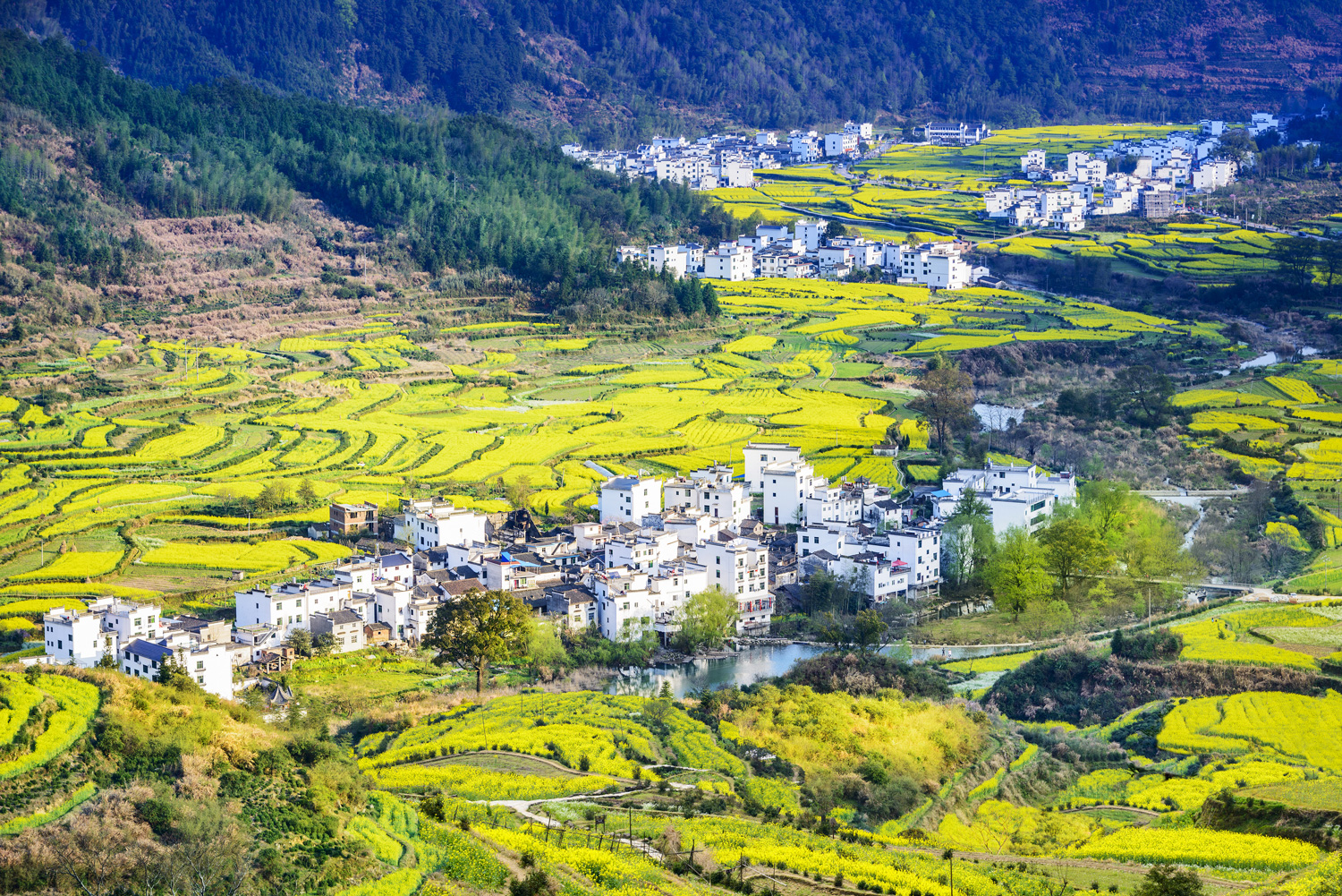 Wuyuan County is known as the most beautiful village of China